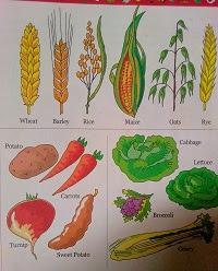types of fruit