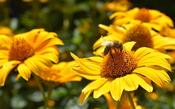 insectes et mauvaises herbes bons pour le jardin
