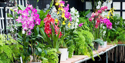 orchid growing conditions
