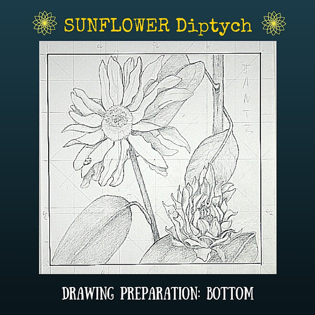 Drawing preparation for BOTTOM Sunflower Diptych