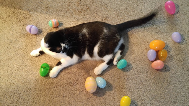 Cats love Easter Egg hunts too