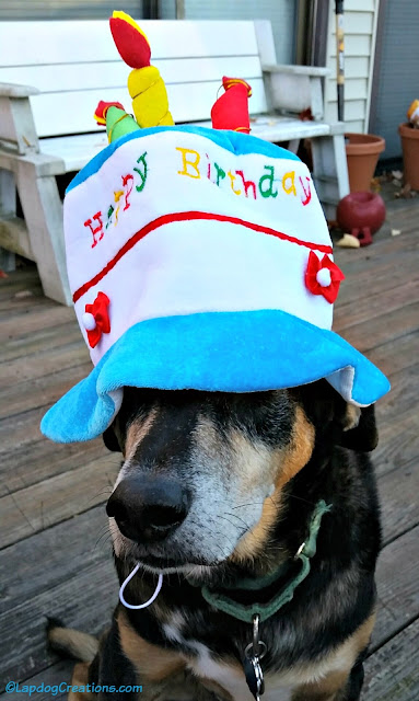 dog in a funny birthday hat