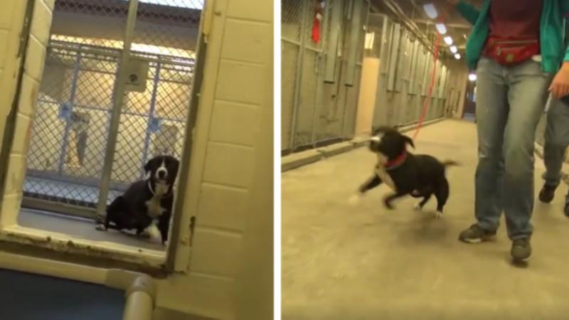 Σκύλος πριν την ευθανασία του δεν μπορεί να συγκρατήσει την χαρά του όταν μαθαίνει ότι θα τον υιοθετήσουν! (βίντεο)