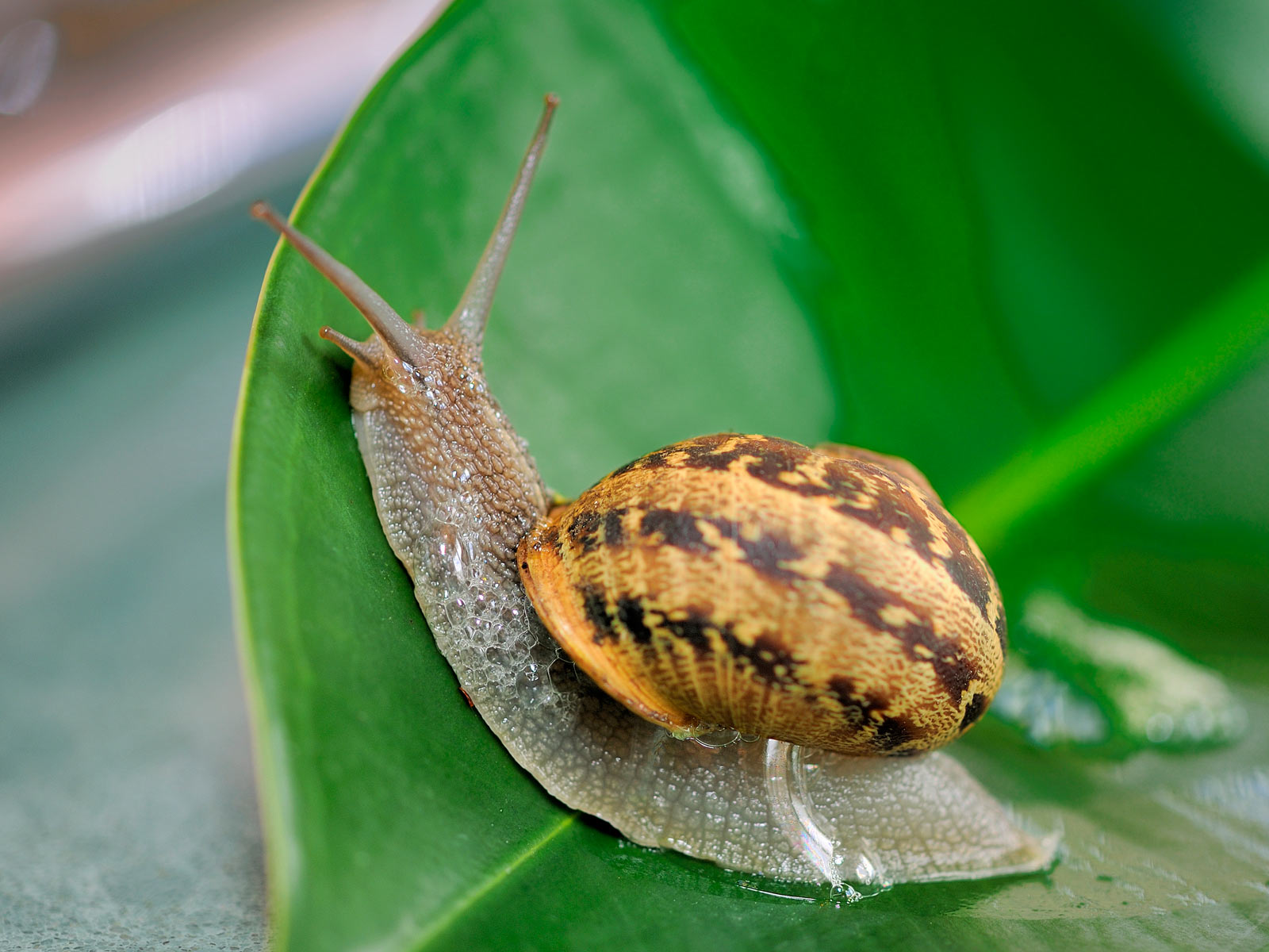 snails wallpapers fun animals wiki videos pictures