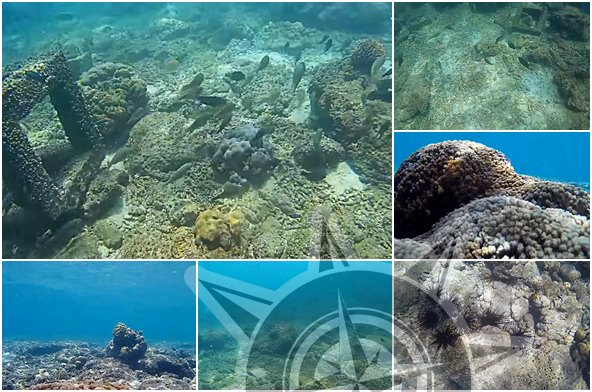 Wisata Snorkeling di Gili Ketapang Probolinggo Jawa Timur