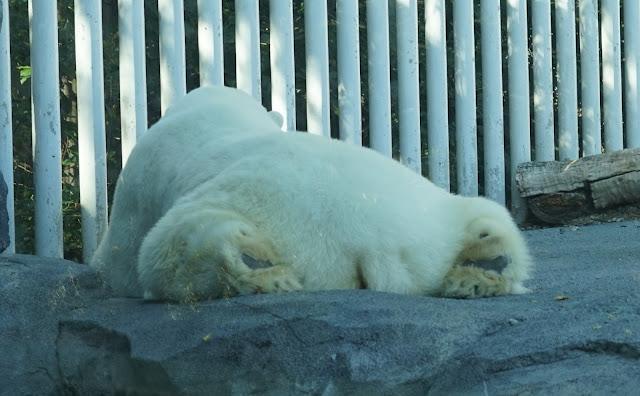 Lost But Loving It   In Alaska!: The Alaska Zoo