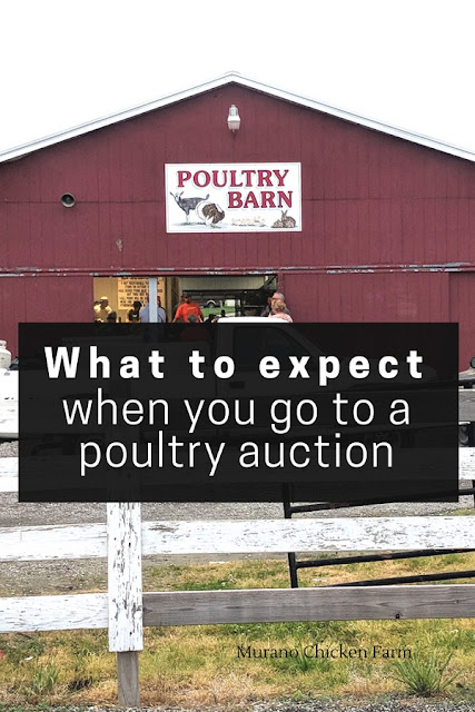 Poultry auctions. What to expect when you go
