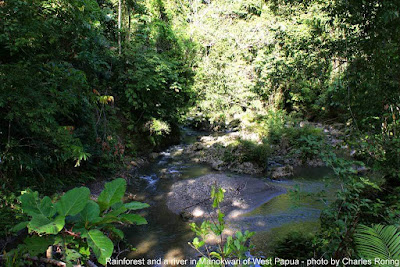 Hiking and wildlife watching in West Papua