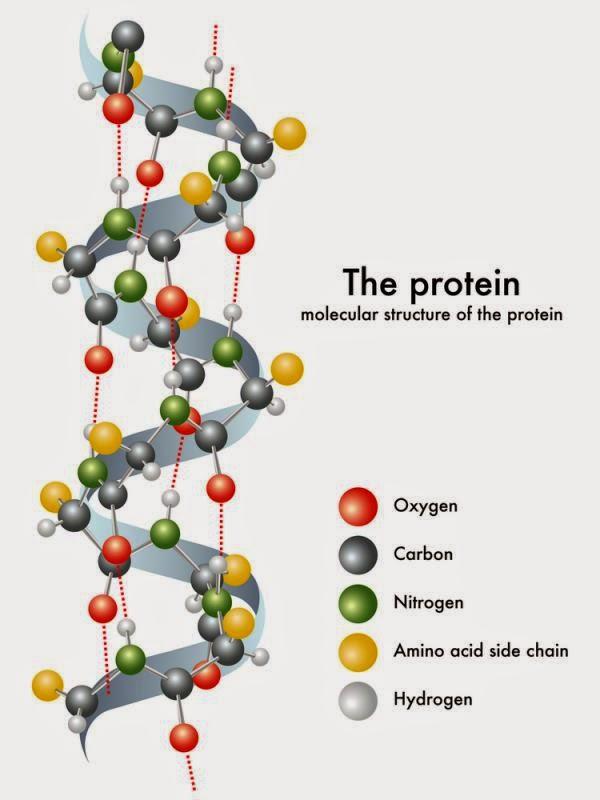 Les prot ines qu 39 est ce que c 39 est a quoi a sert - A quoi sert le magnesium ...