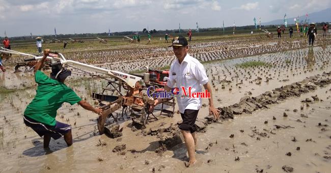 Pembajak Sawah Pringsewu Adu Kemahiran Mengolah Sawah Perebutkan Piala Bupati