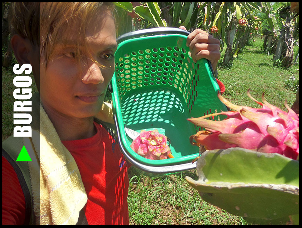 REFMAD DRAGON FRUIT PLANTATION, BURGOS, ILOCOS NORTE