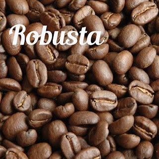 karakteristik robusta