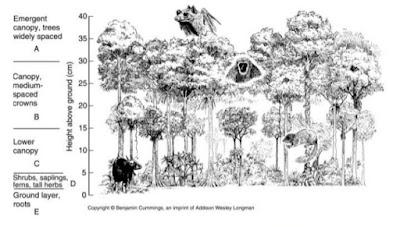 Stratifikasi hutan