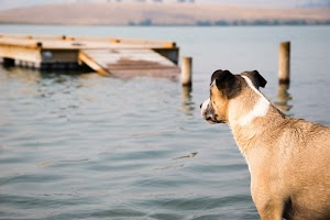 8 môn thể thao mạo hiểm cho chó