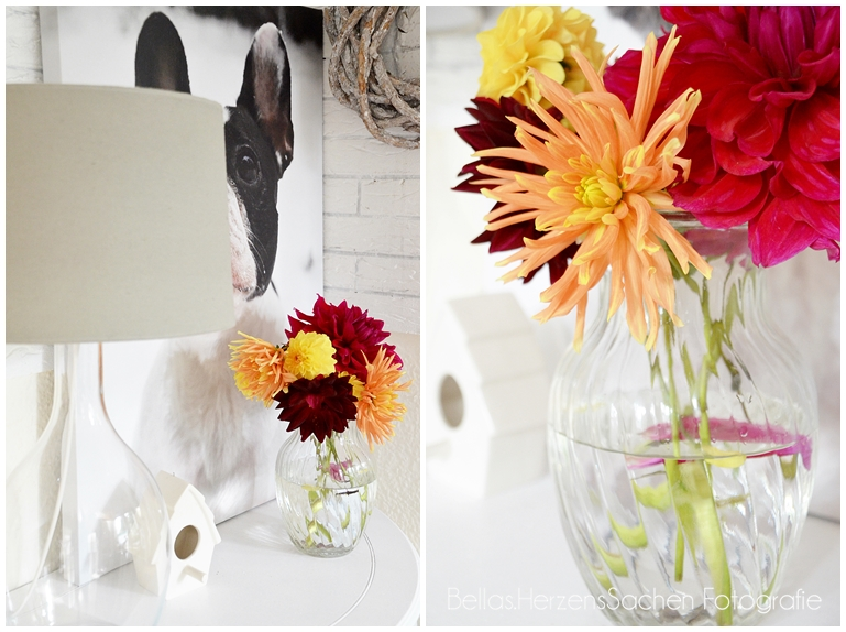 bunte Dahilien in Vase