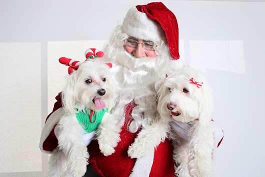 Santa Clause Dogs