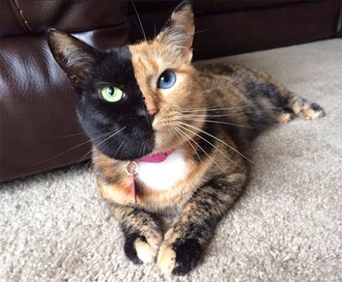 Top 6 Most Beautiful Cats In The World