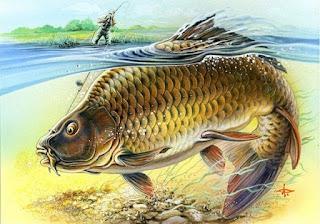 cara menggambar ikan mas