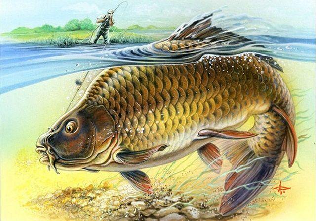 gambar ikan mas kartun