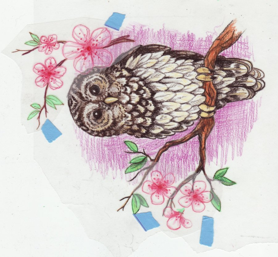 28 Owl Tattoo Designs Ideas: Owl Tattoo Designs Ideas Photos Images Pictures