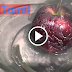 WARNING WAXED APPLE CAUSES CANCER