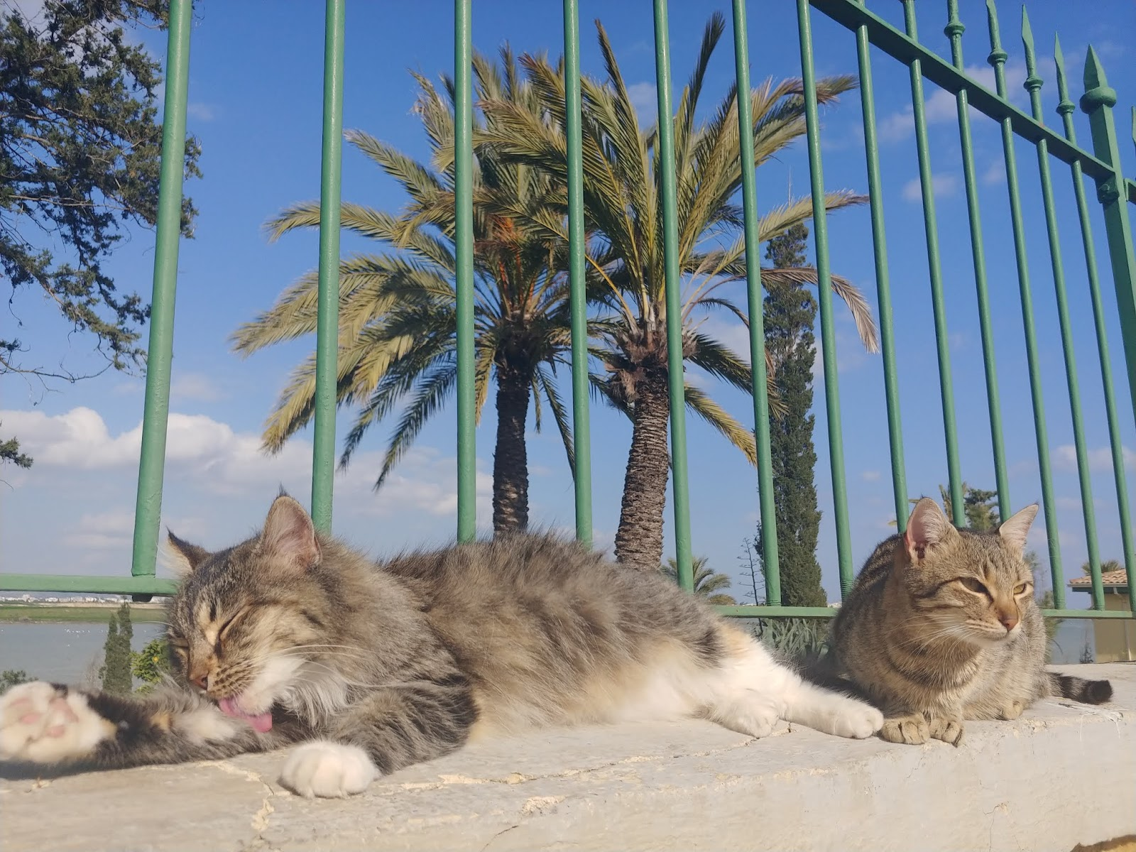 Koty Larnaka zimą