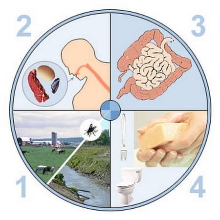 Gastro-entérite : symptômes et alimentation.