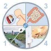 Gastro-entérite : symptômes et alimentation