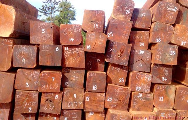 gỗ-căm-xe