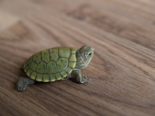 Me, My Self and Confession: Leaving The Turtle Behind