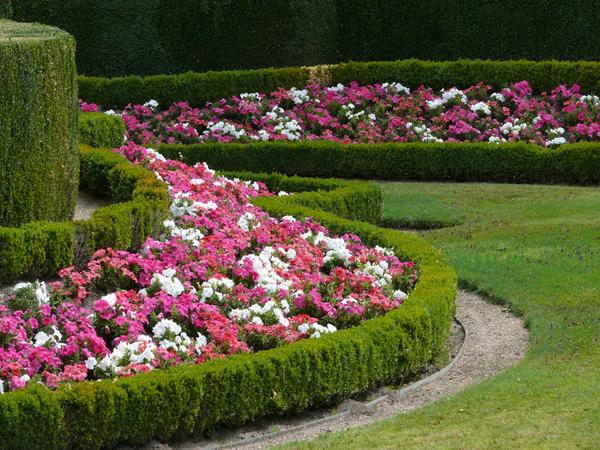 Guadalupe jardines de flores for Decoracion de jardines pequenos con flores