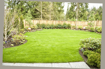 Awesome Fresh Grass and Wooden Fence and Small Plants Around and Large Area Ideas For Backyard Patio Designs Picture 005