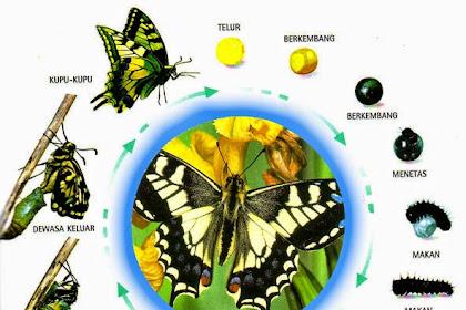 Tentang metamorfosis sempurna dan metamorfosis tidak sempurna