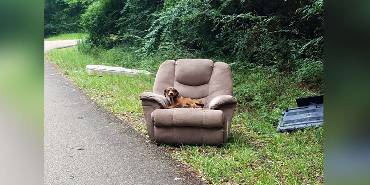 Poor Puppy Was Dumped With A Chair And A TV And Thought His Owner Would Come Back