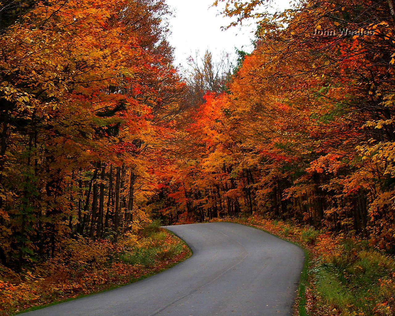 autumn path fall algonquin canada park wallpapers ontario country november autum canadian paisajes road colours place