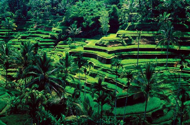 5 Destinasi Wisata Menarik Yang Ada Di Ubud, Bali