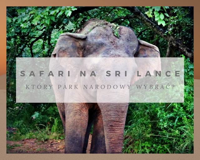 Safari na Sri Lance - gdzie pojechać i który Park Narodowy wybrać?