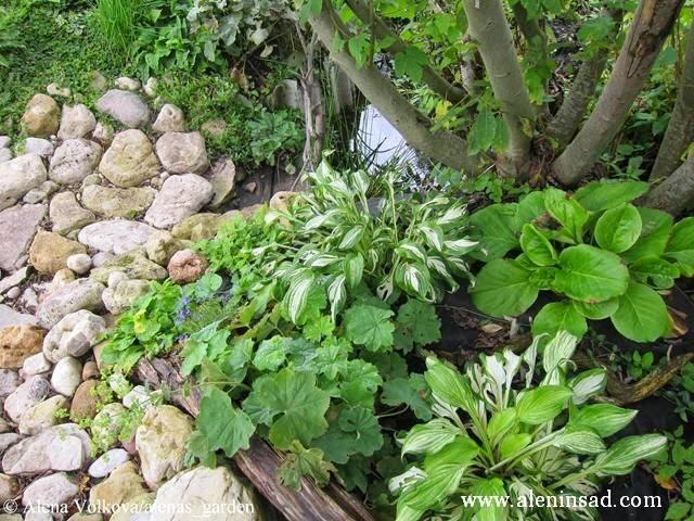 примула, манжетка, хоста, бадан, камни, ручей, коряги, спанбонд, лутрасил, агроволокно, агротекс, нетканый материал, против сорняков, использование в огороде