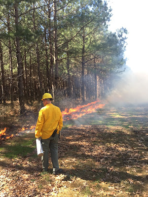 Pine Barrens Restoration Site New Jersey Ecological Forest prescribed burns