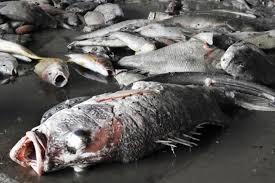 ô nhiễm môi trường biển ở miền Trung
