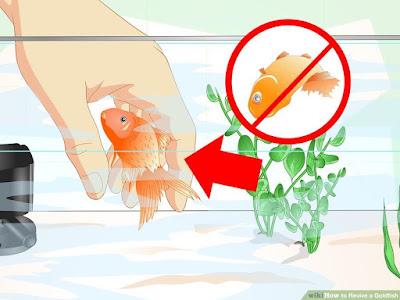 balıkların fanustan atlaması