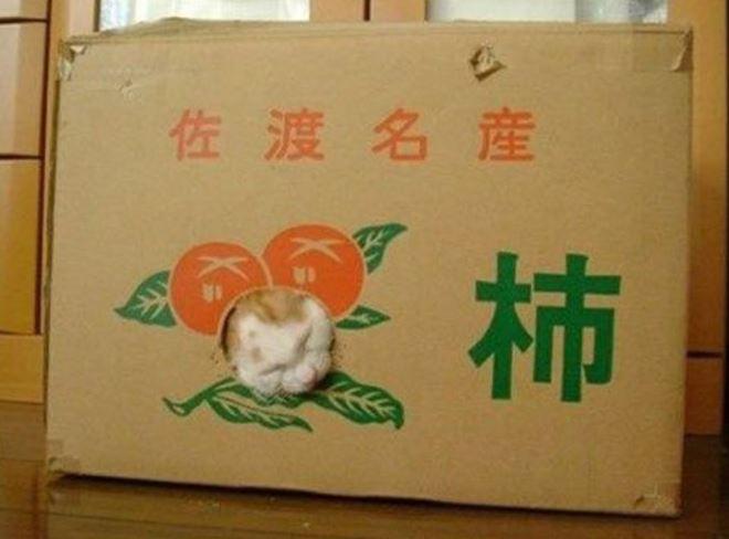 carton et chat 34