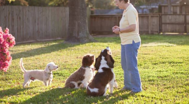 Does Your Dog Need to Bark All The Time?