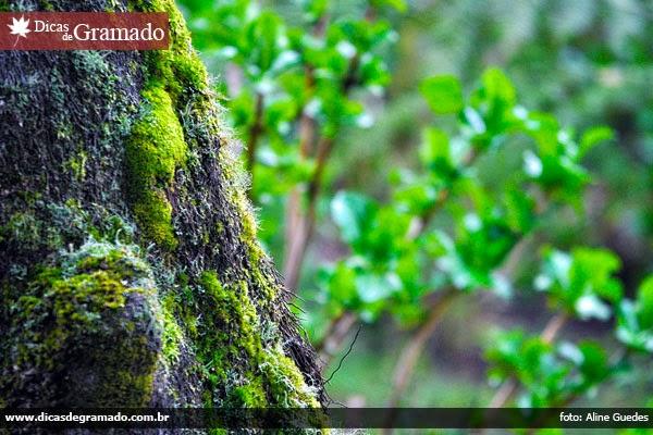Árvore no Lago Negro - Gramado/RS