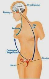 Hormon Prolaktin Tinggi