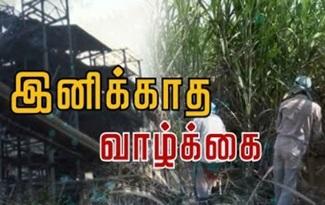 Sugarcane Farmers Puthiya Thalaimurai Tv