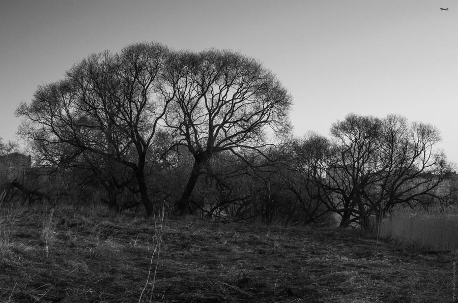 Монохромные деревья