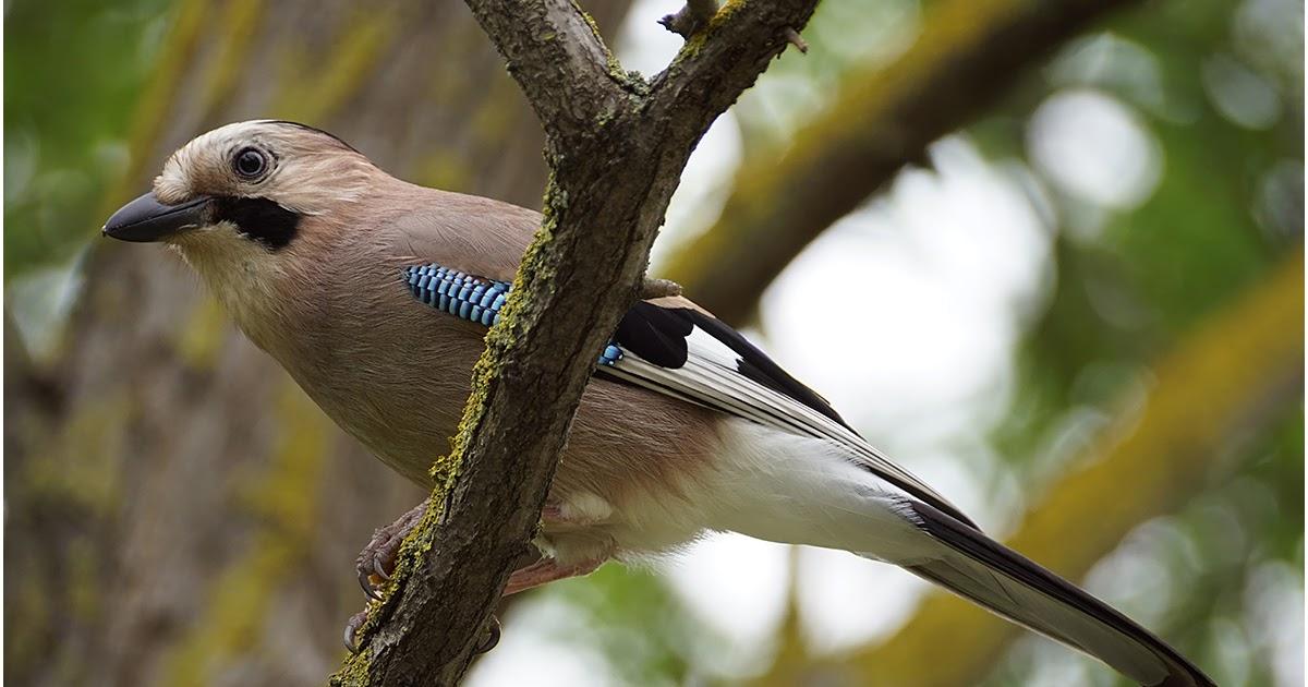 птицы краснодара фото с названиями суставов
