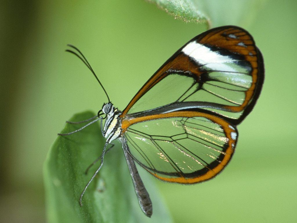 PicturesPool: Beautiful Butterfly Wallpapers