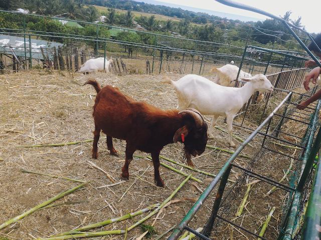 Garin Farm